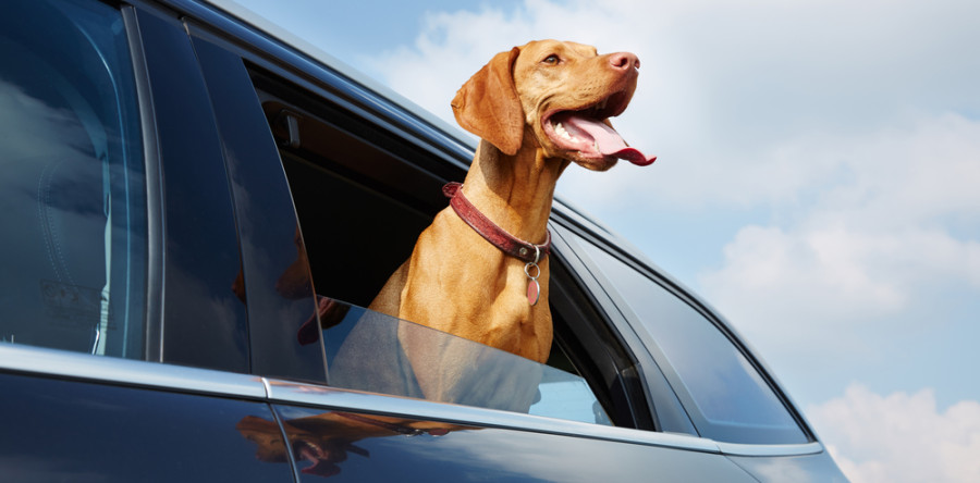 Car Riding Etiquette for Real Estate Agents—and Home Buyers